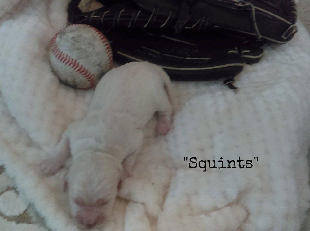Squints 1-week-old!