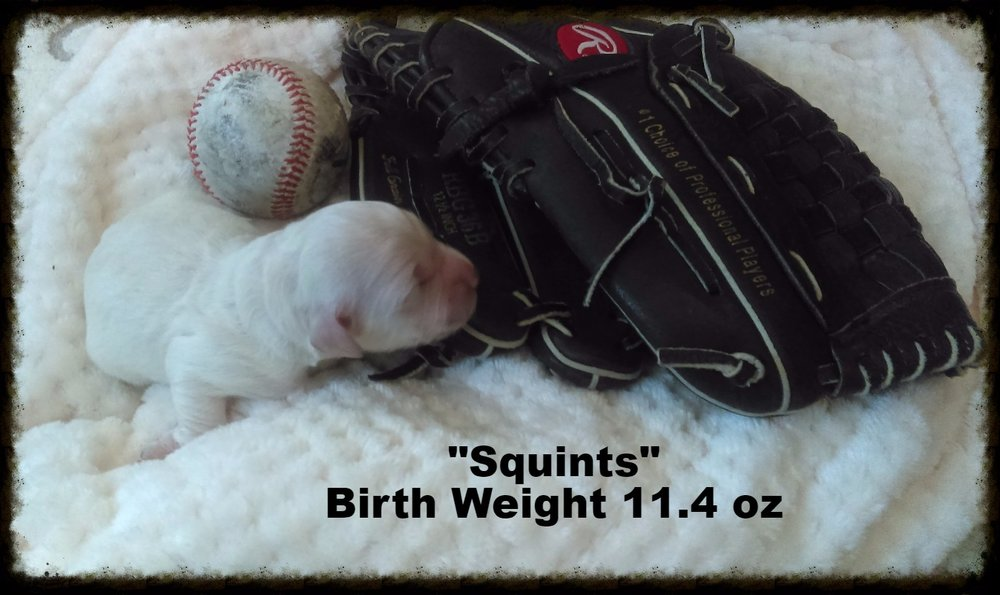 Squints was born weighing 11.4 oz.