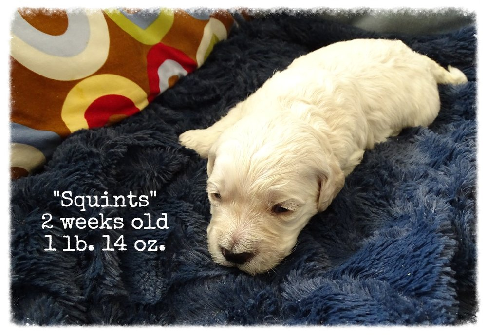 2-weeks-old, 1 lb 14 oz