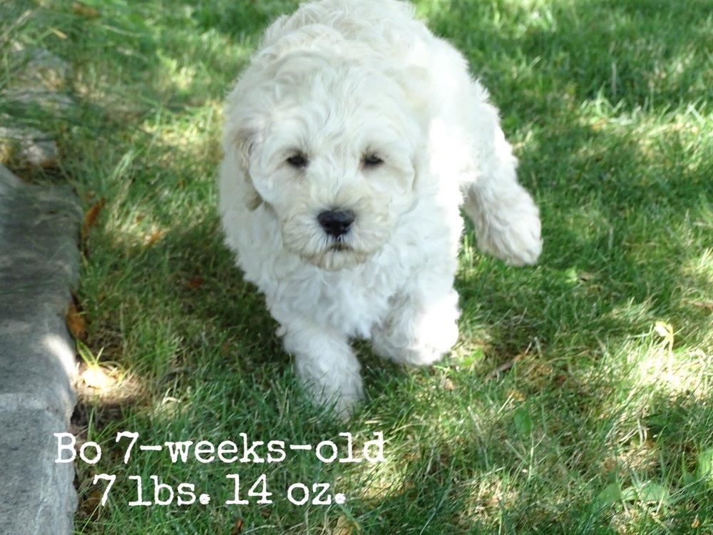 7-weeks-old! 7 lbs 14 oz.