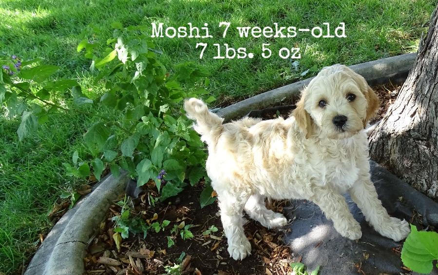 Moshi_7 weeks old_1.jpg