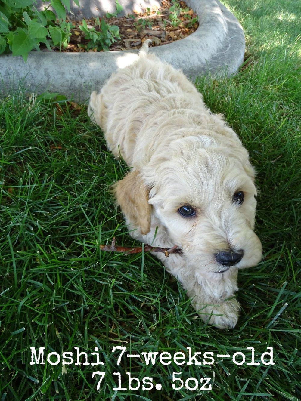 Moshi_7 weeks old_3.jpg