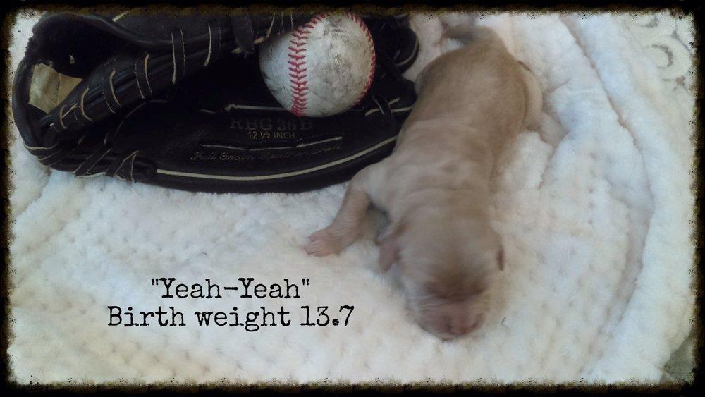Yeah-Yeah_Birth Weight_1.jpg
