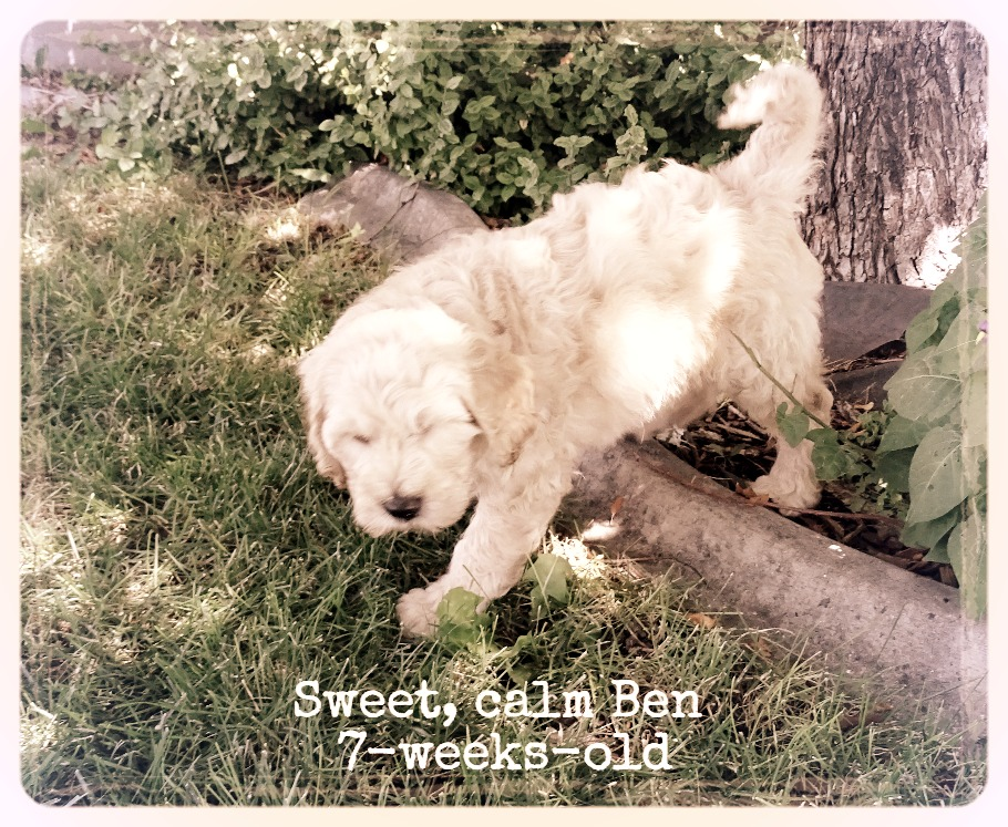 7-weeks-old