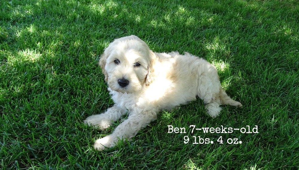 7-weeks-old, 9 lbs 4 oz.