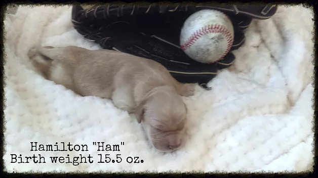 Hamilton_Ham_Birth Weight_1.png