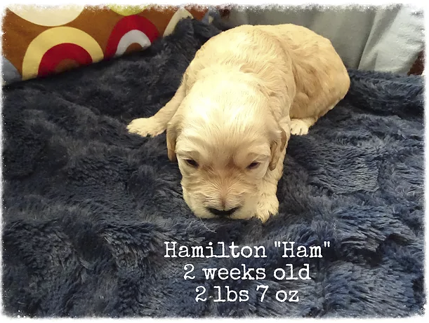 Hamilton 2 weeks old_2.png