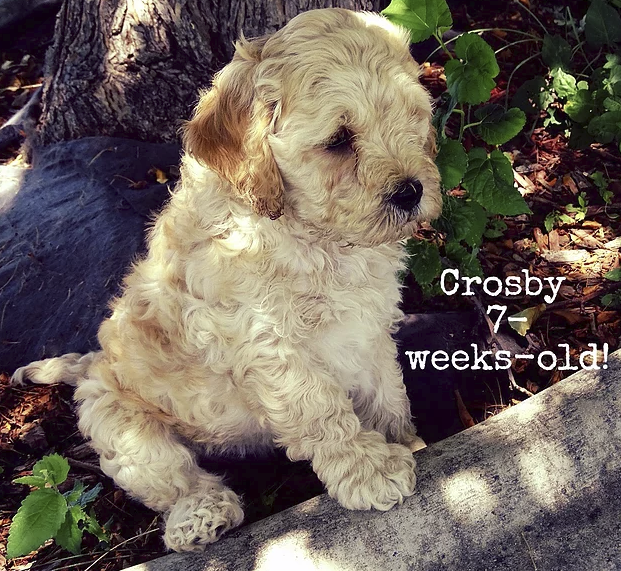 Crosby_ 7 weeks old_4.png