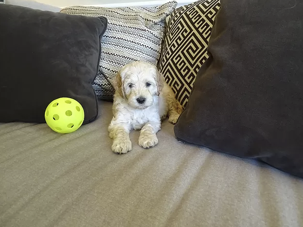 6-weeks-old!