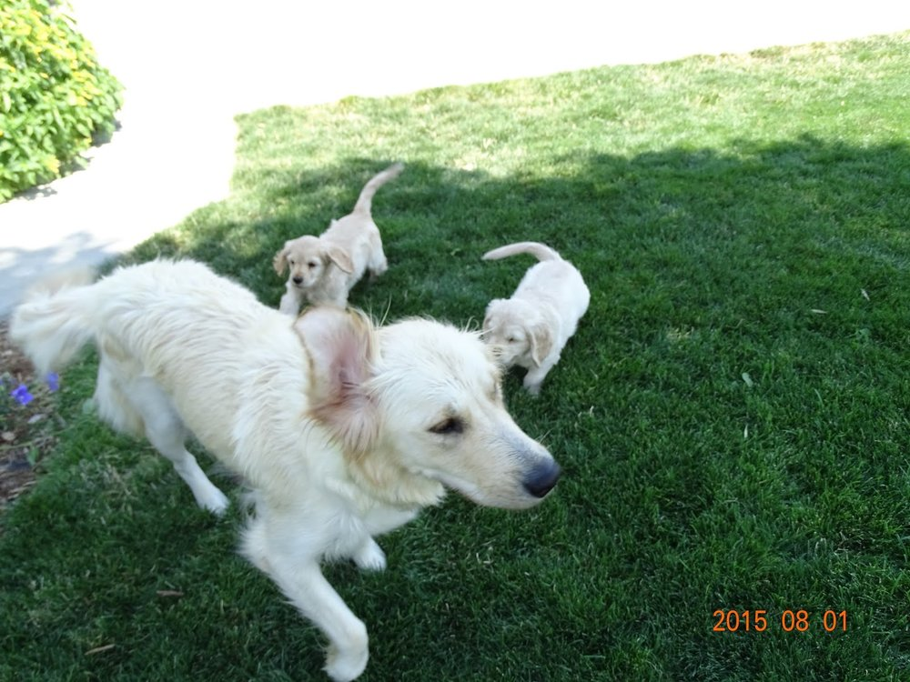 Logan and Banana at 7-weeks-old playing with Mommy Pinkerton