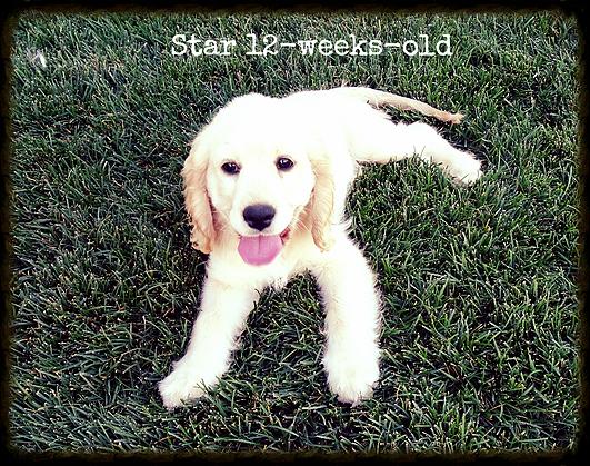 Star_12-weeks-old.png