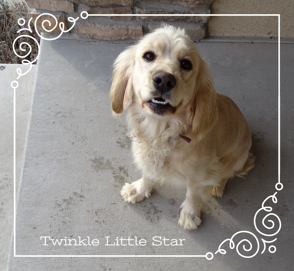 Twinkle Little Star 2.jpg