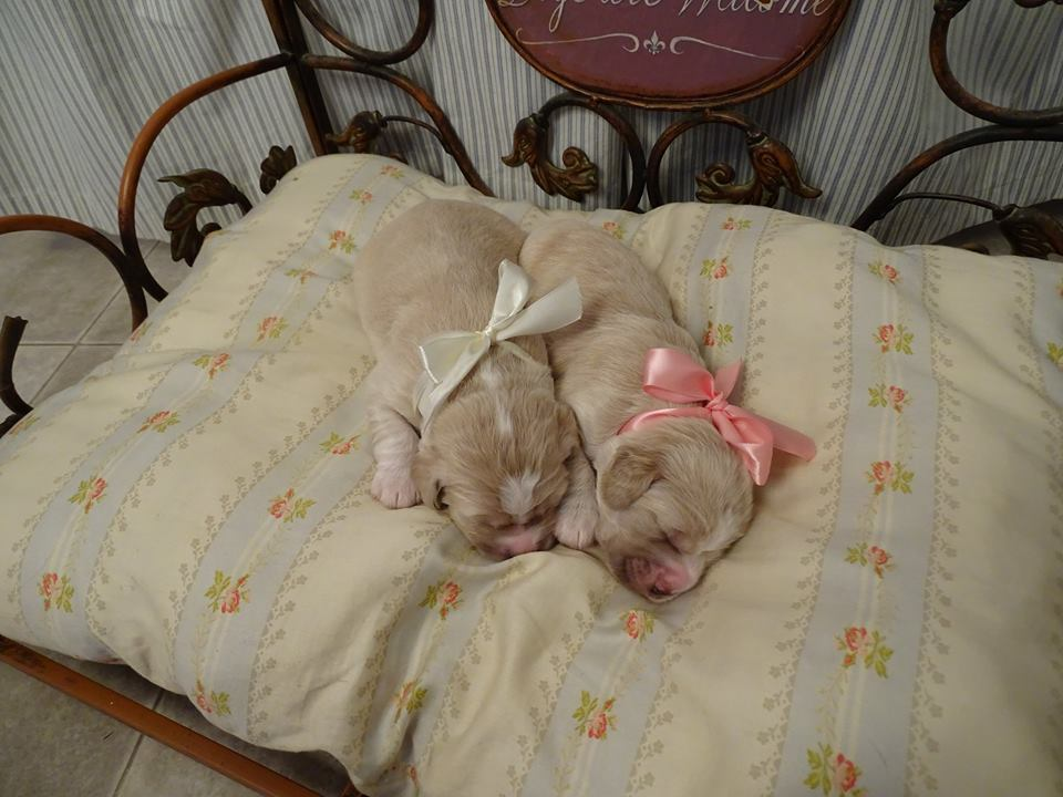 Jack and jill_1 week old.jpg