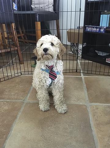 moshi wearing a tie.png