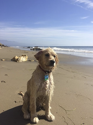 Summer at the California Beach, lucky Gal! Photo Courtesy of Lauren, thanks so much!