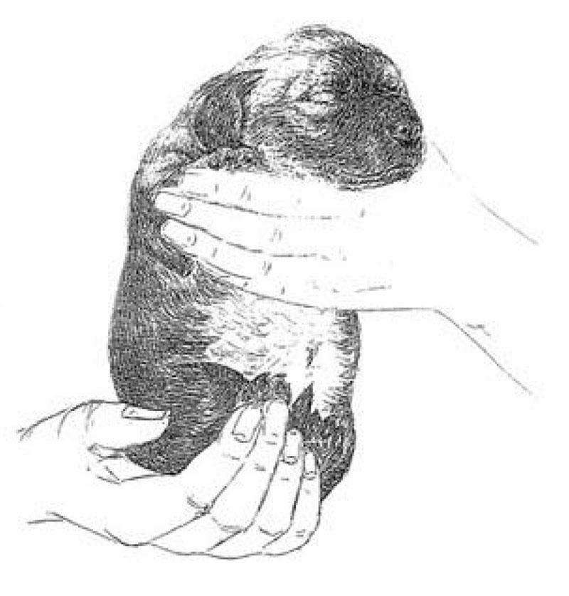 Figure 2 Head held erect