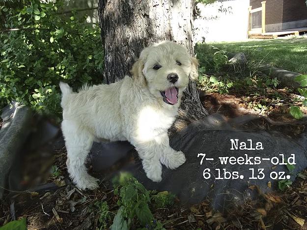 Nala 7-weeks-old! 6lbs. 13oz.