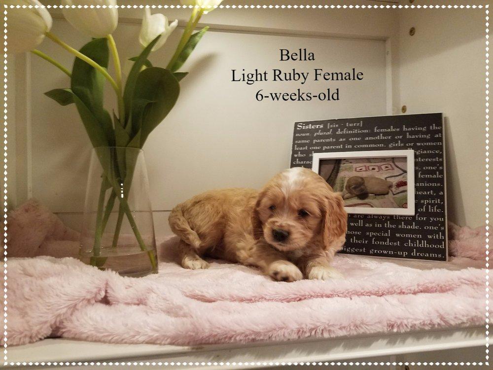 Bella 6-weeks-old!