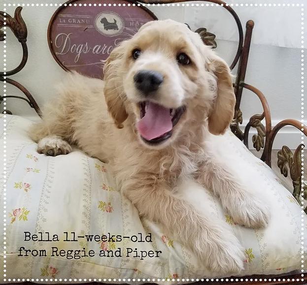 Bella 11-weeks-old!