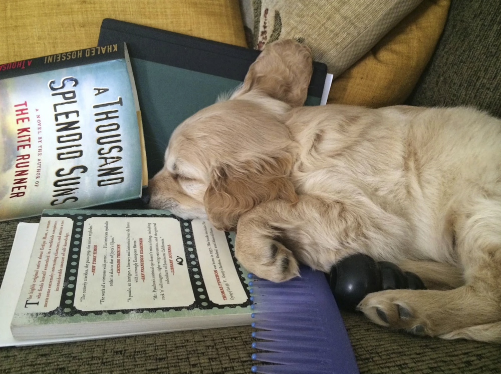 Kona relaxing with a good book -