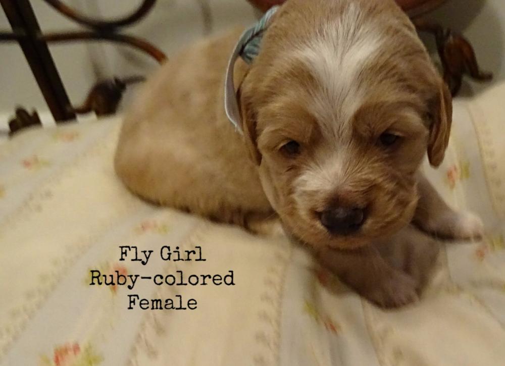 Fly girl female.png
