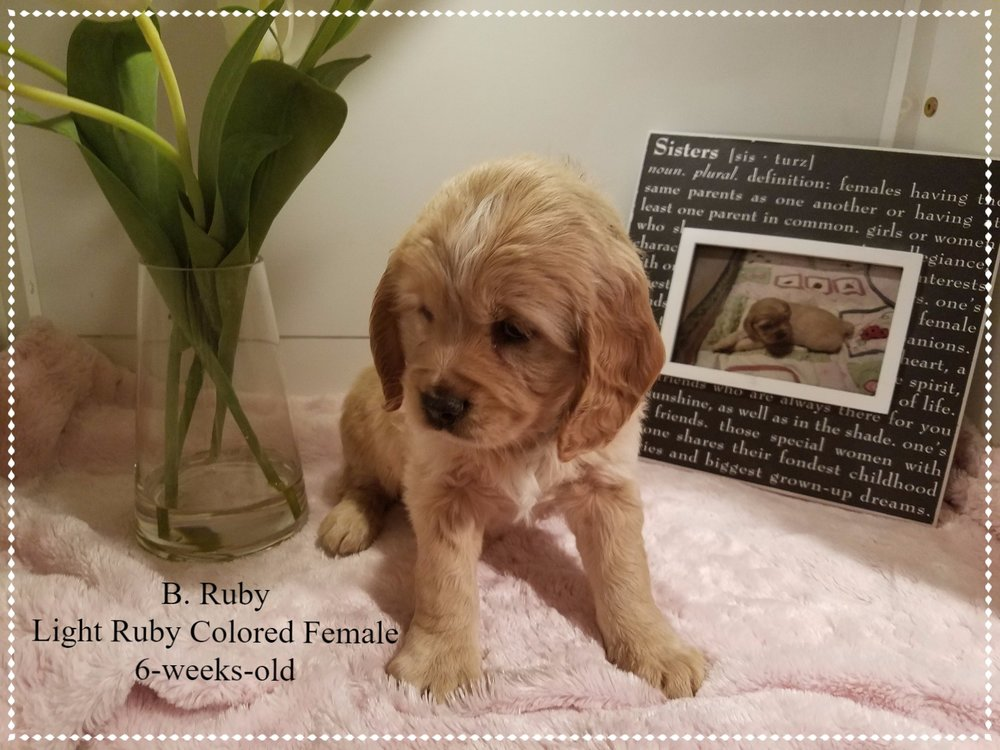 B Ruby 6 weeks old.jpg