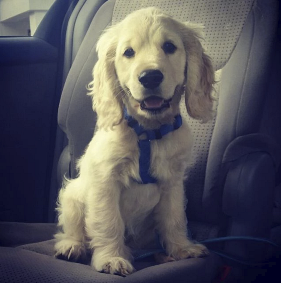Logan at 11 weeks old. Going for a car ride!