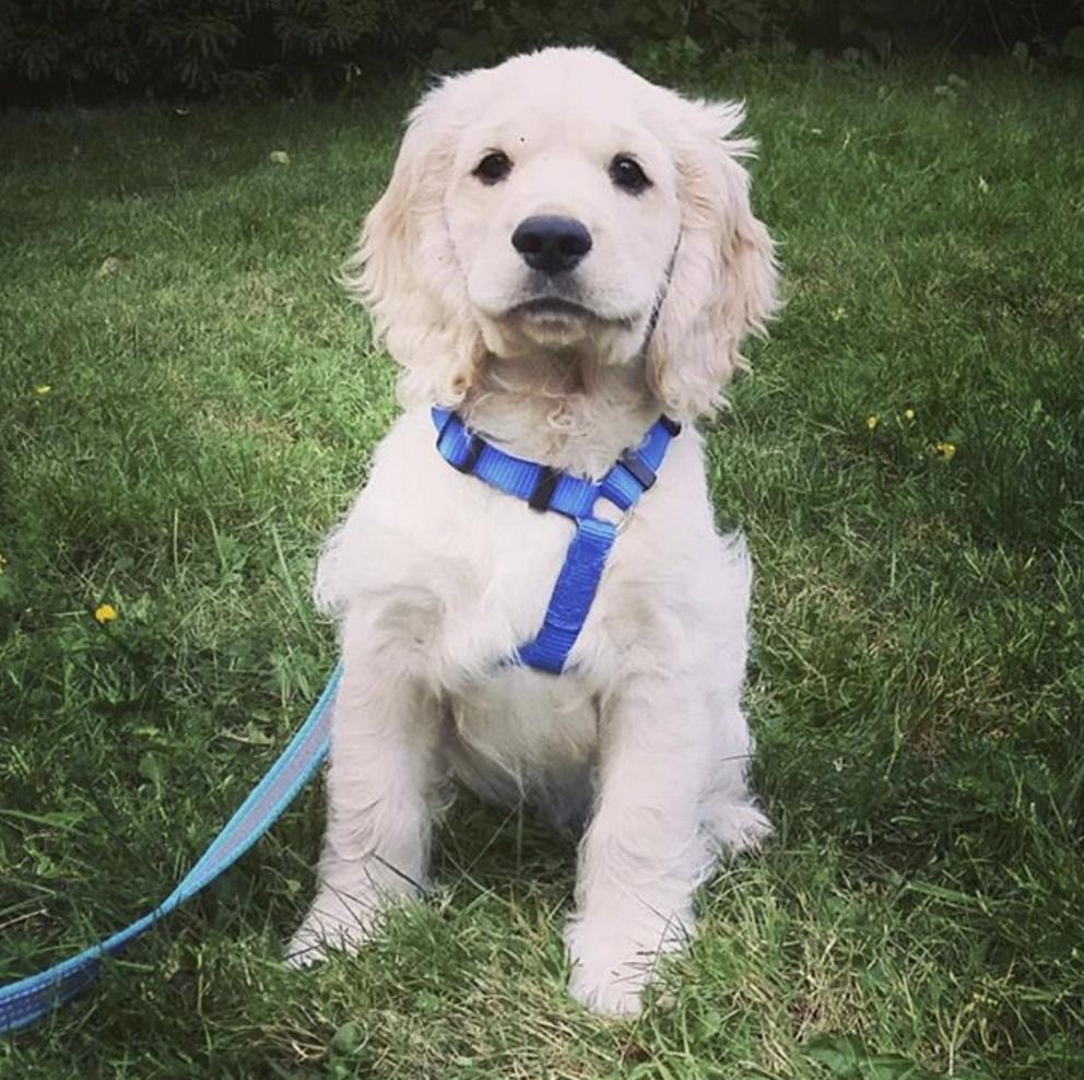 Proud pup!