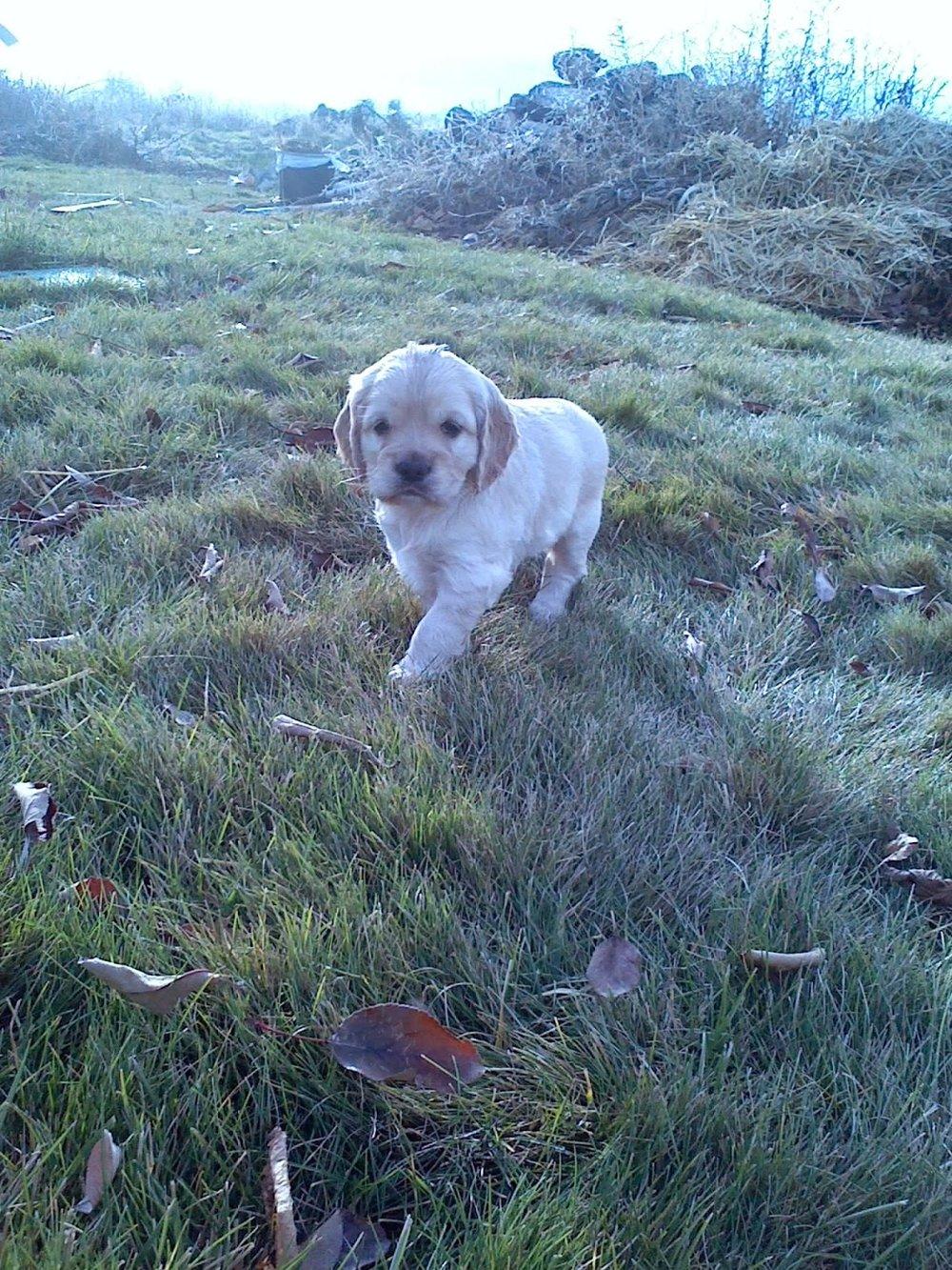 piper puppy.jpg