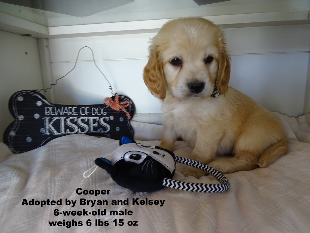 Cooper is our biggest pup, he is so handsome! He is his mamas favorite, he is always nursing! -
