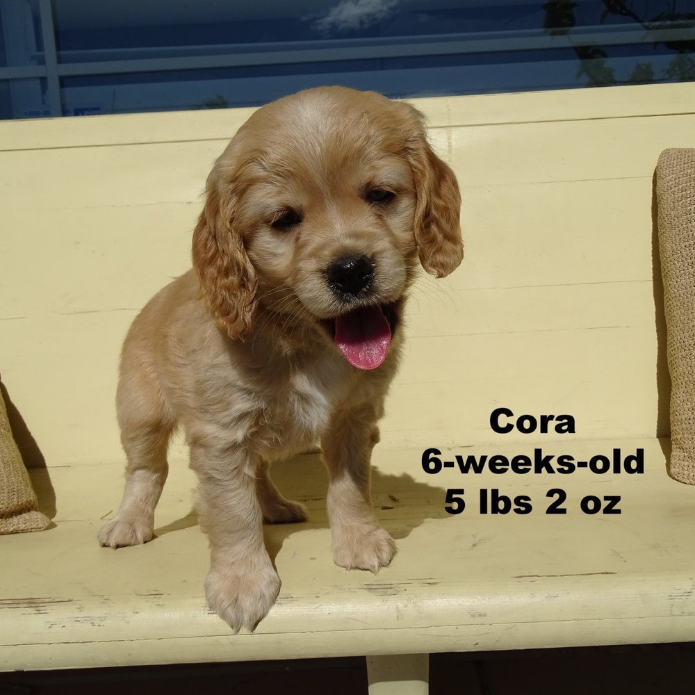 Cora Available!!! She is such an adorable girl, we love her blue eye, it so pretty! -