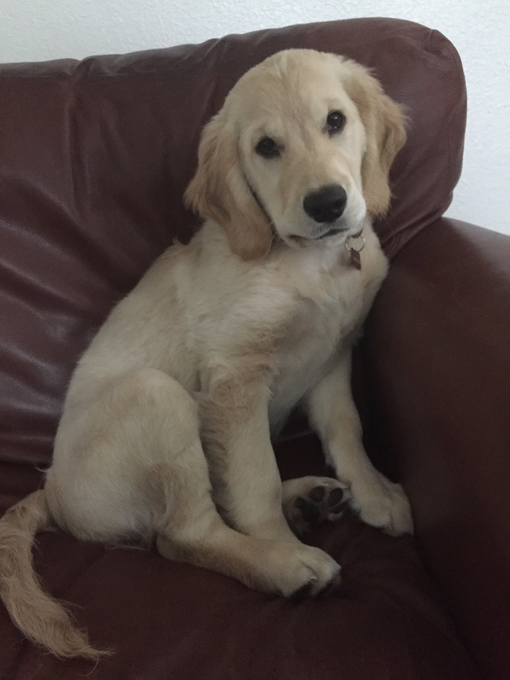 Tanner, 6 Months Old