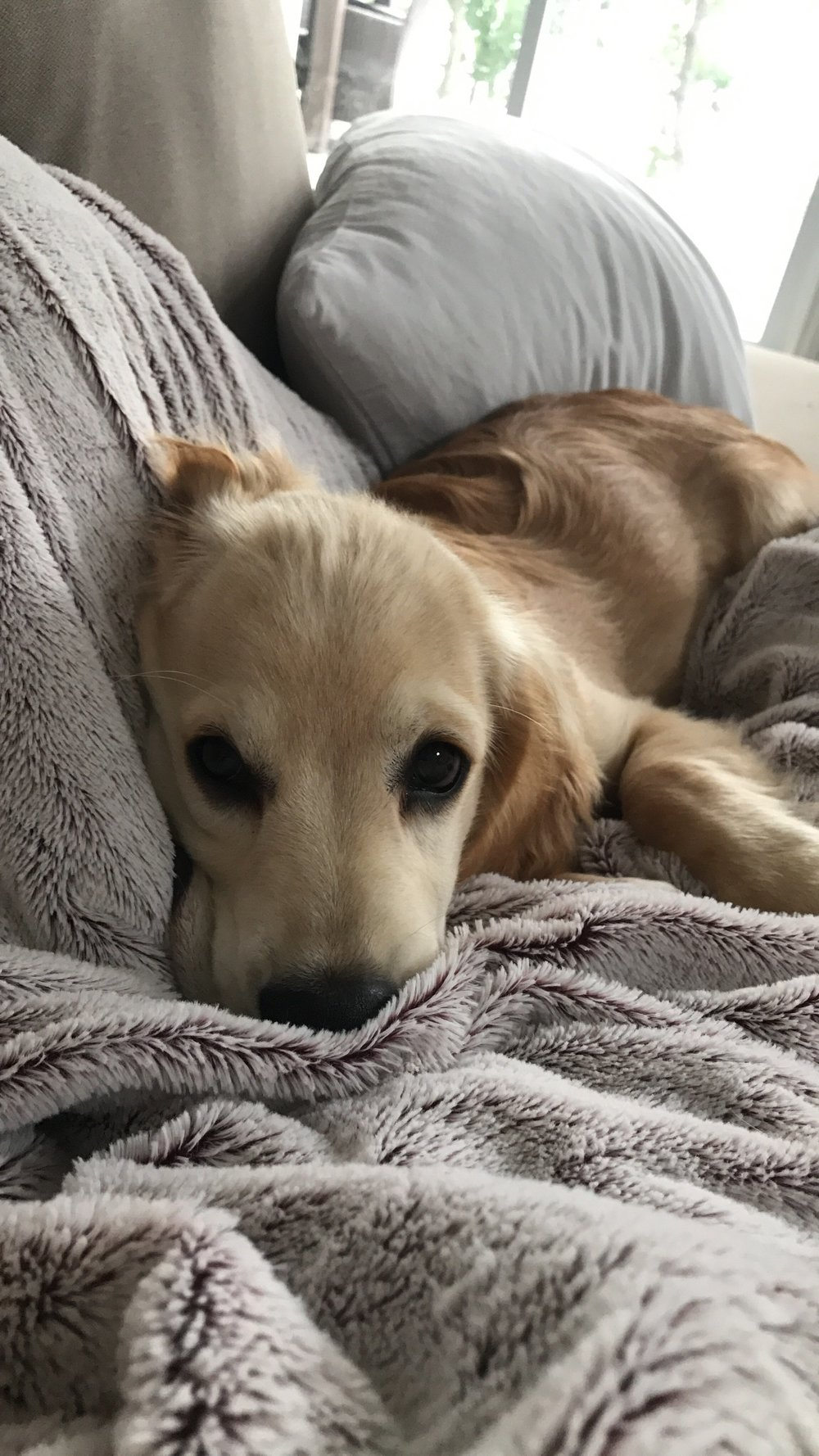 Cooper (Havarti), 6 Months