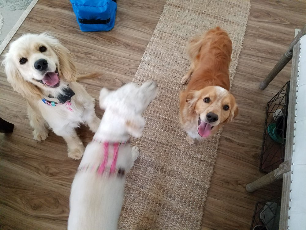 Here is Star on the left, Nala in the middle, and Sullivan on the right. Nala is kind of a blur here but you can get an idea of their nice size! -