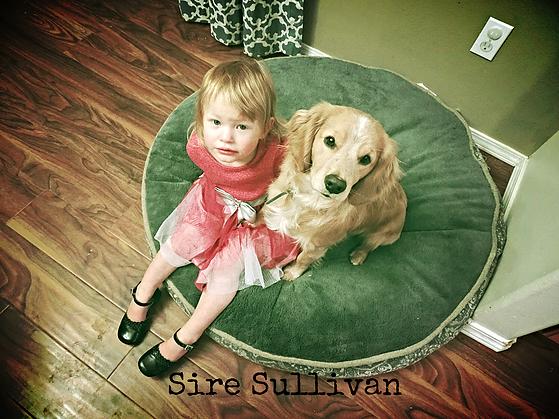Sire Sullivan_2.png
