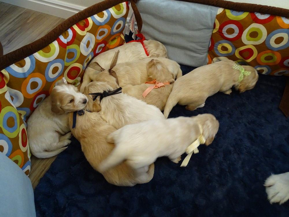 Puppies 3 weeks old