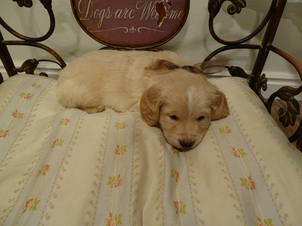 Dashwood 5-weeks-old