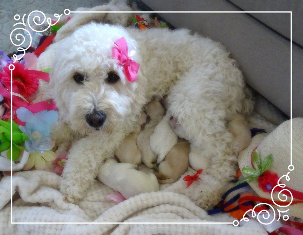 Our Fancy Nancy fur-babies! -