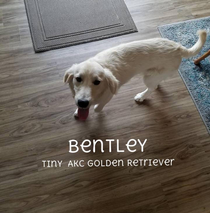 Bentley 3.jpg