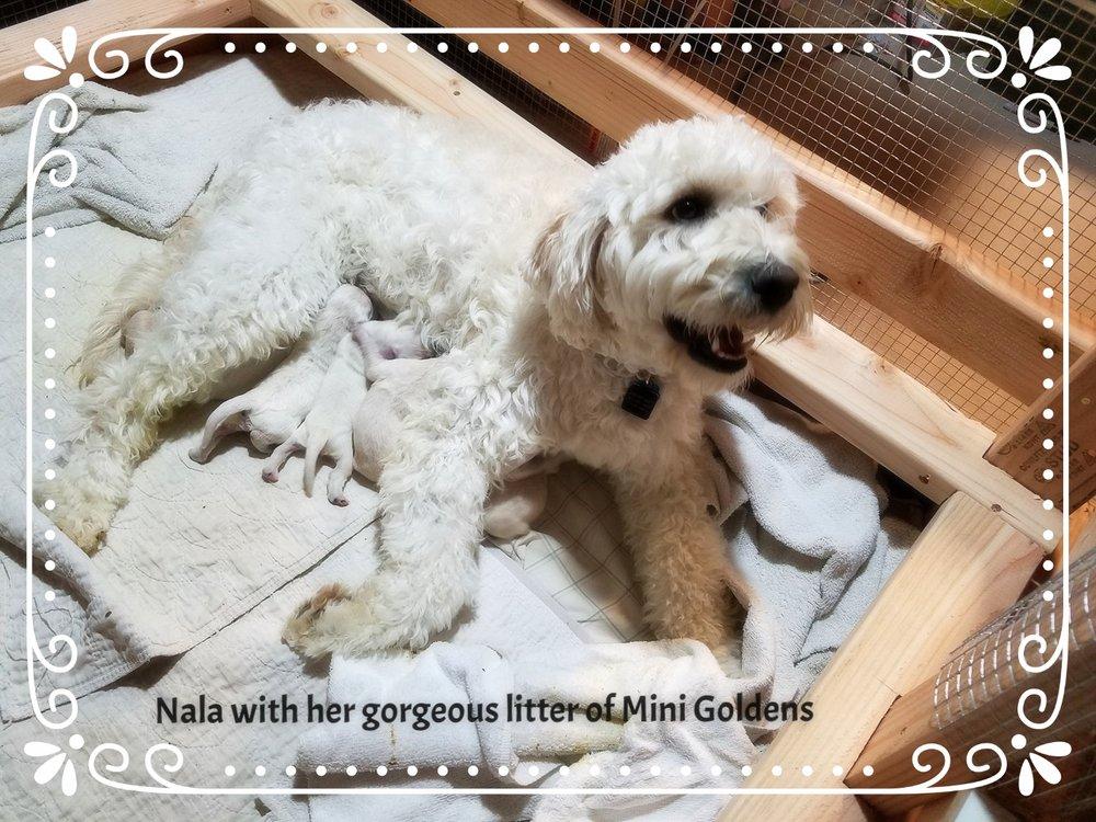 Nala and her new babies