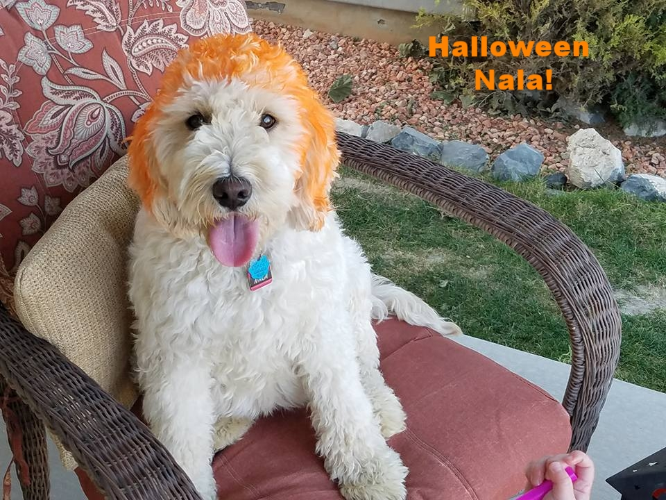 Nala, Carrot Top, Halloween 2017