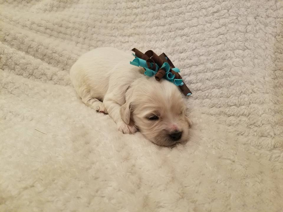 2 Weeks Old