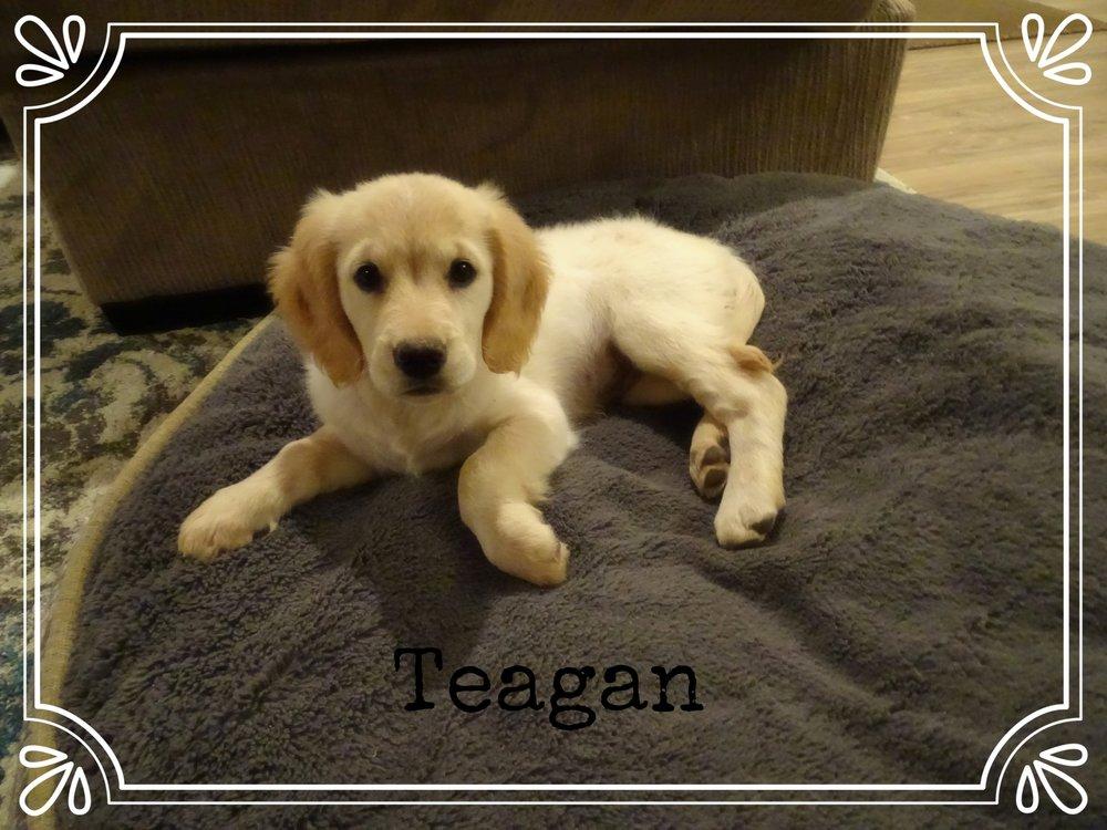Teagan