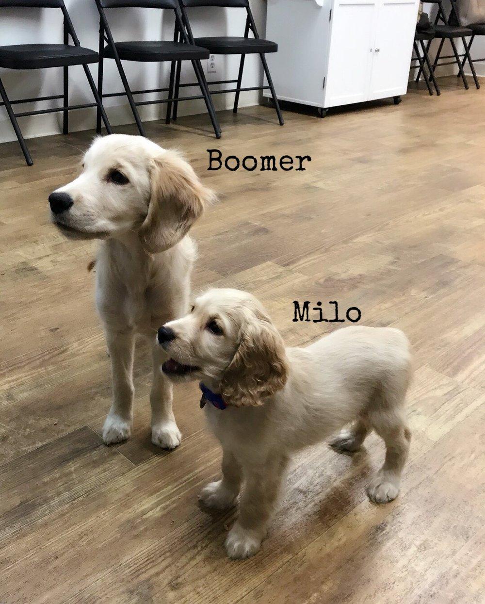 boomer and Milo 2.jpg