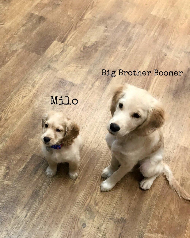 boomer with Milo.jpg