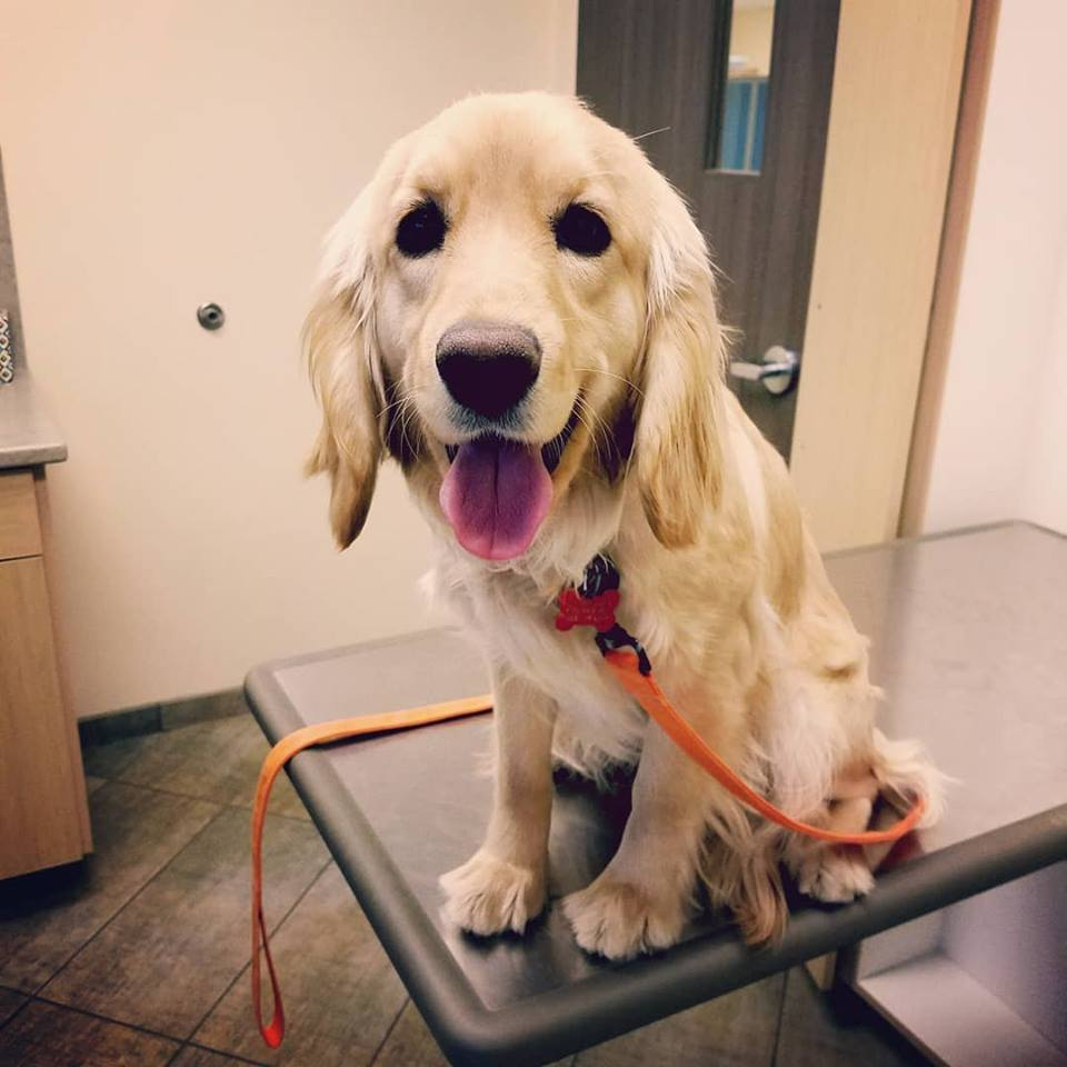 Brie's 10 month vet check-up
