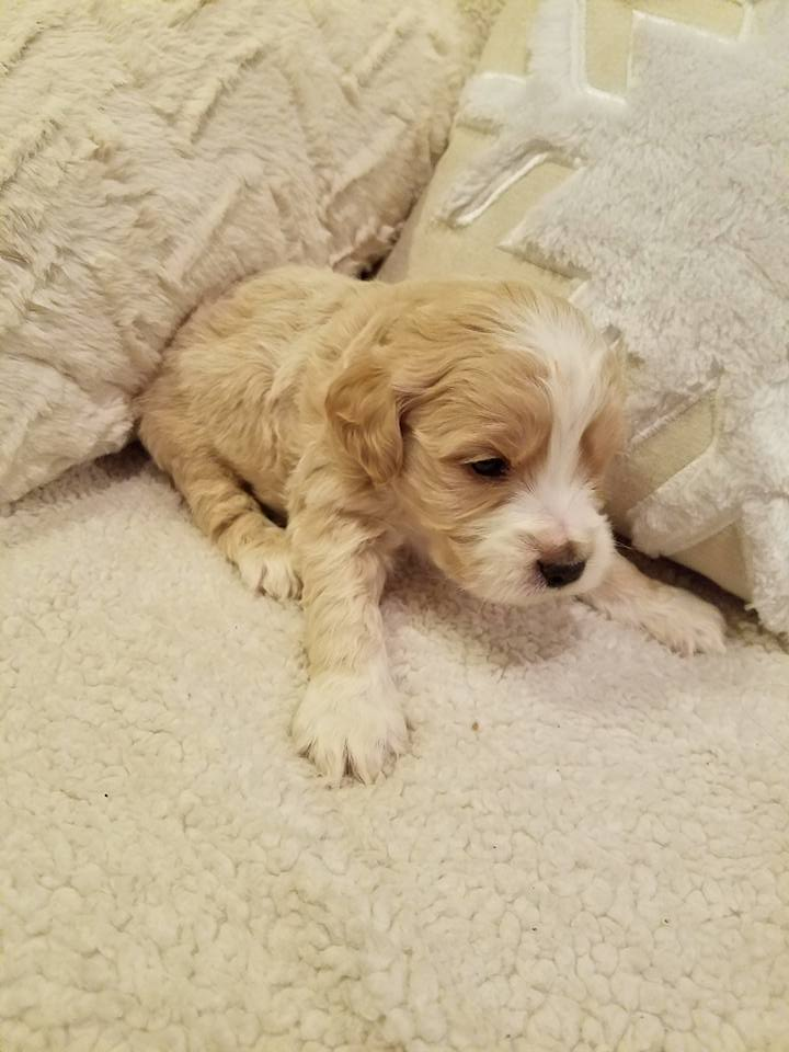 1-6-18_Scotchkiss_4 Weeks Old 2.jpg