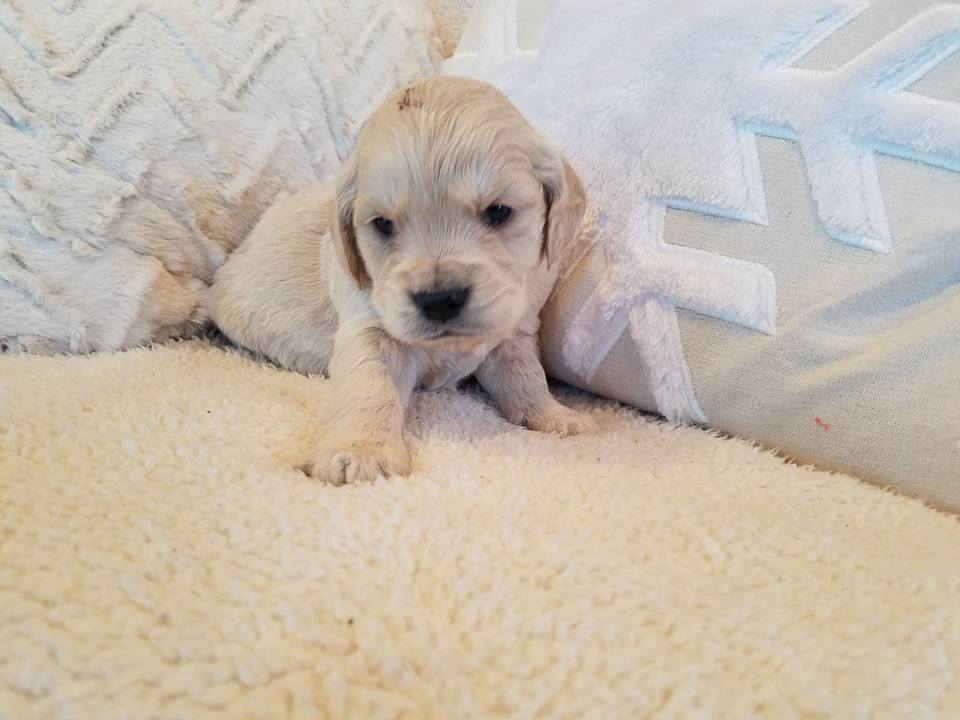 1-6-18_Nougat_4 Weeks Old 2.jpg