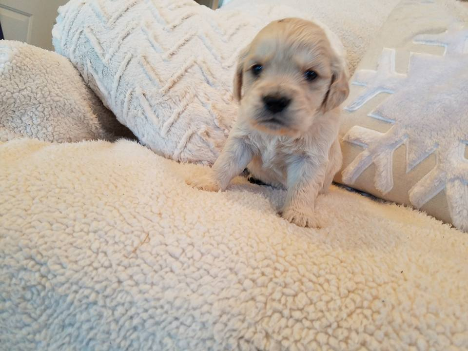 1-6-18_Nougat_4 Weeks Old 4.jpg