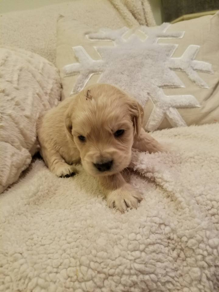 1-6-18_Nougat_4 Weeks Old 8.jpg